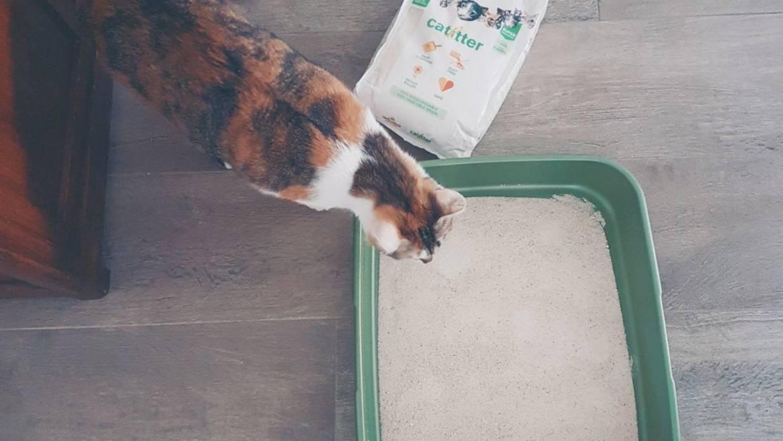 ALMO NATURE CAT LITTER: LA NOSTRA NUOVA SCELTA GREEN